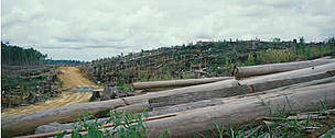 Sabah (Borneo), Malaysia. Felled forest burnt to plant first crop of Palm oil on estate. Sabah, ... / &copy;: WWF / Sylvia Jane YORATH