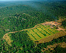 Logging mill near Apiacs, Mato Grosso state, Juruena National Park, Brazil.