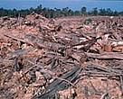 Illegal logging in Sumatra, Indonesia.<BR>