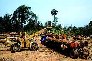 Illegally logged forest, Laos. This area was subsequently flooded with the construction of the Nam Theun II dam.