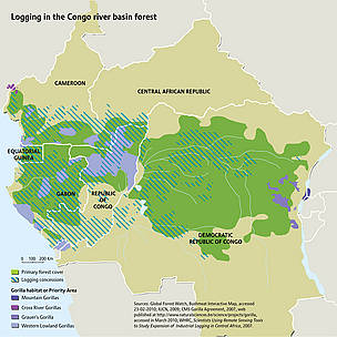 Logging in the Congo river basin forest. China is the largest consumer of logs from the DRC, buying ... / &copy;: Riccardo Pravettoni / Sources: Global Forest Watch, Bushmeat Interactive Map, accessed 23-02-2010; IUCN, 2009; CMS Gorilla Agreement, 2007, web published at http://www.naturalsciences.be/science/projects/gorilla, accessed in March 2010; WHRC, Scientists Using Remote Sensing Tools to Study Expansion of Industrial Logging in Central Africa, 2007. 