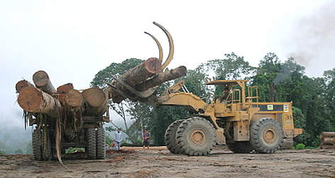 Caterpillar loading logs on a truck. Heavy logging activities in Sabah, North Borneo, Malaysia - ... rel=