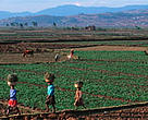 The lending programmes of the IMF and the World Bank give little attention to the rights of the poor, 70 per cent of whom live in rurual areas, such as these Madagasgy  subsistence farmers.<BR>