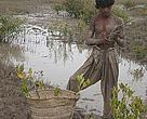 A boy plants mangroves to restore the degraded lands of his village on the Indus Delta. Lack of freshwater and deforestation have devastated what was once a thriving mangrove ecosystem.