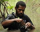 Mangrove seedling collection Bilia