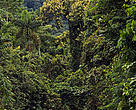 With each passing minute, an acre of the Amazonian rainforest is deforested, generally lost to conversion for agriculture.