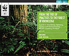 Forest and Climate Initiative -- Learning Manual