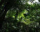 Bosque Mbaracayú