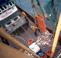 Landing a meagre catch, North Atlantic Ocean. / &copy;: WWF-Canon / Mike R. JACKSON