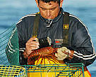 Measuring lobsters, Baja California, Mexico.