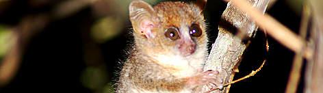 / ©: WWF Madagascar / Louise Jasper
