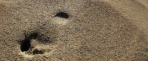 footprint Human footprints in sand Ecological footprint / ©: Chris Martin Bahr / WWF-Canon