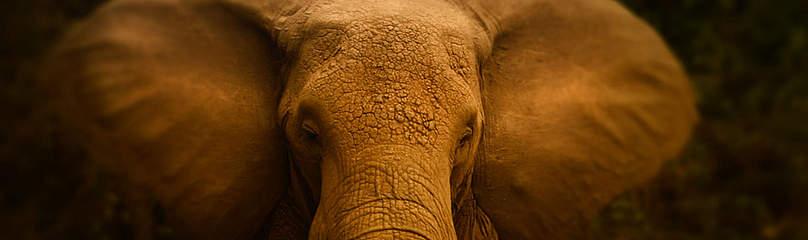 / ©: naturepl.com / Jeff Vanuga / WWF-Canon