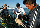 MSC certified fishermen with California spiny lobsters at Baja California, Gulf of California, ... / ©: WWF-Canon / Gustavo YBARRA