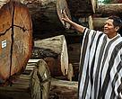 Presidente de la Federación Asheninka de Atalaya contemplando la madera extraída de los bosques de Puerto Esperanza.