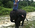 Noverica (Very) Widjojo on an elephant