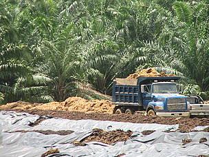 El compostaje del desecho de los frutos de la palma permite mejorar el contenido de materia ... / ©: WWF CARO