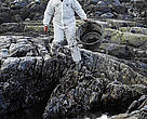 WWF volunteer helping with oil spill clean up efforts. Fedje, Norway.