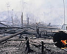 Burning the rainforest to clear land for oil palm tree (Elaesis guineensis) plantations near the Bukit Tigapuluh Nature Reserve, Sumatra, Indonesia.