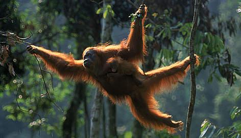 / ©: naturepl.com/Anup Shah / WWF