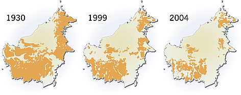 Orangutan distribution on Borneo (Indonesia, Malaysia). The distribution of Orangutan on Borneo is ... rel=