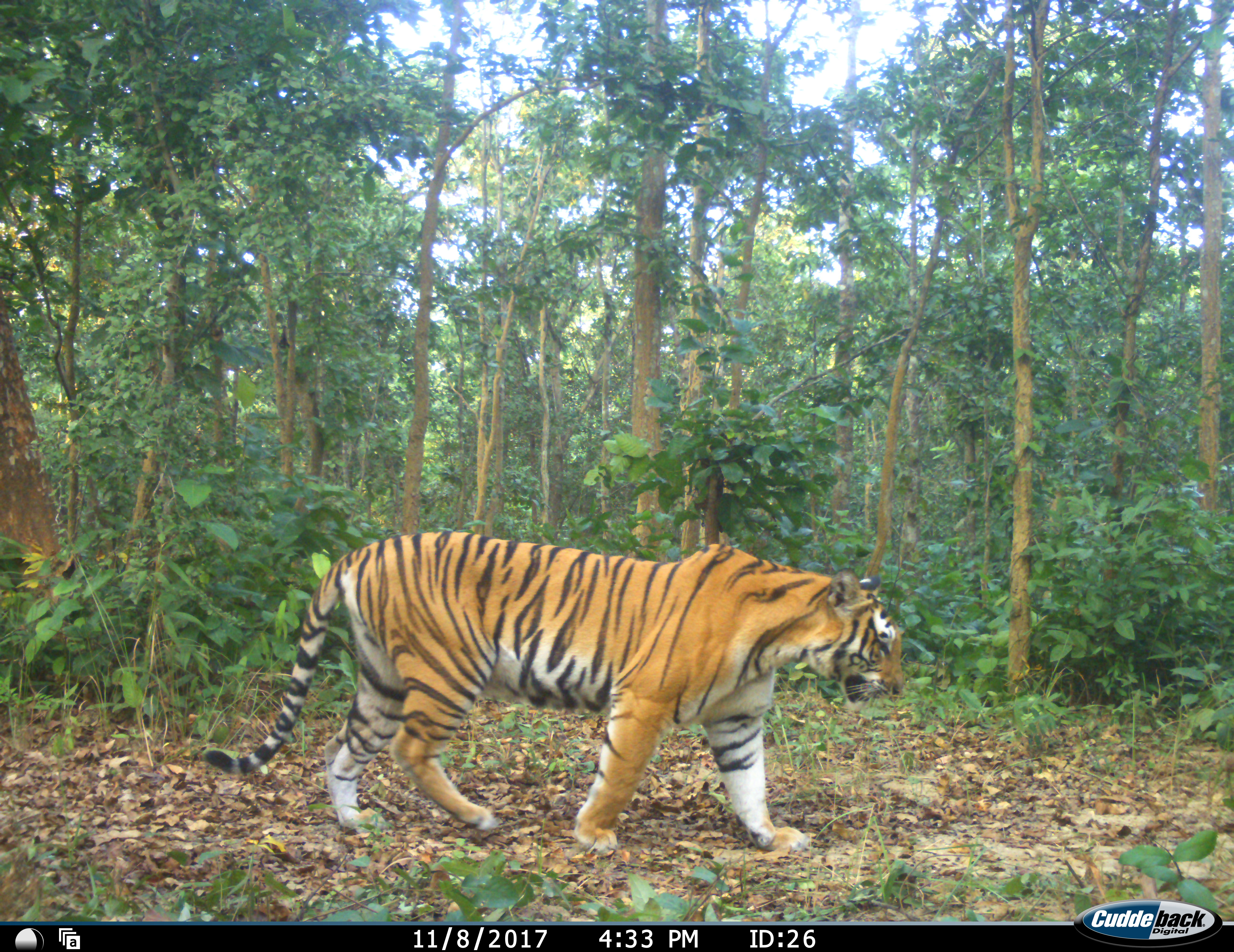 Nepal launches 3rd tiger survey in the transboundary Terai ...