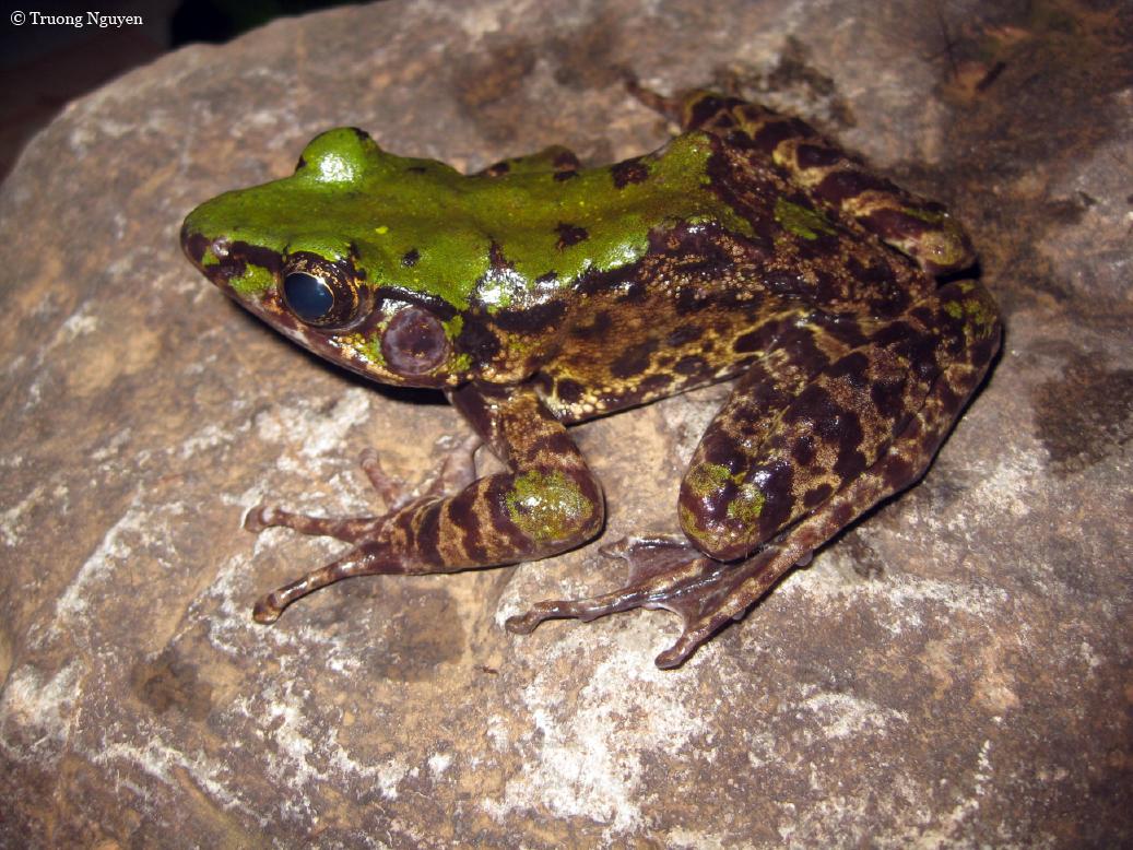 wild frog kostenlos spielen