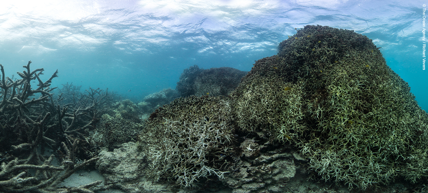 The Great Barrier Reef: A Reef in Crisis