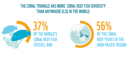 The Coral Triangle has the most reef fish diversity in the world