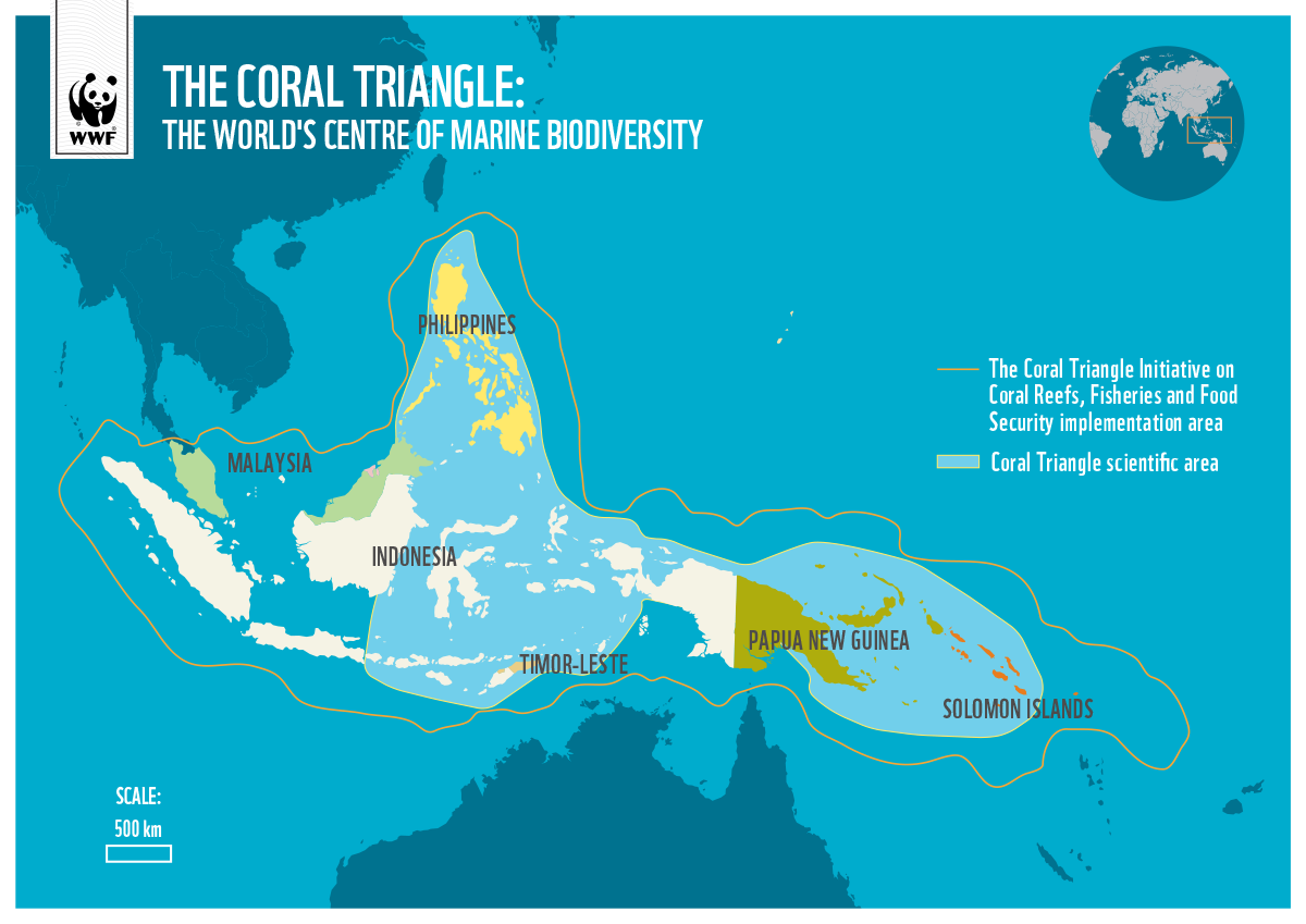 Coral triangle facts wwf the coral triangle region is highlighted below in blue gumiabroncs Image collections