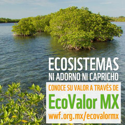 Banner: EcoValor Mx, el valor de los ecosistemas