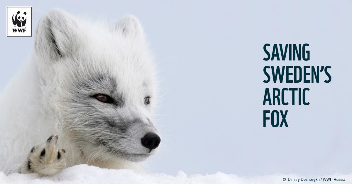 Arctic Lemmings Fox