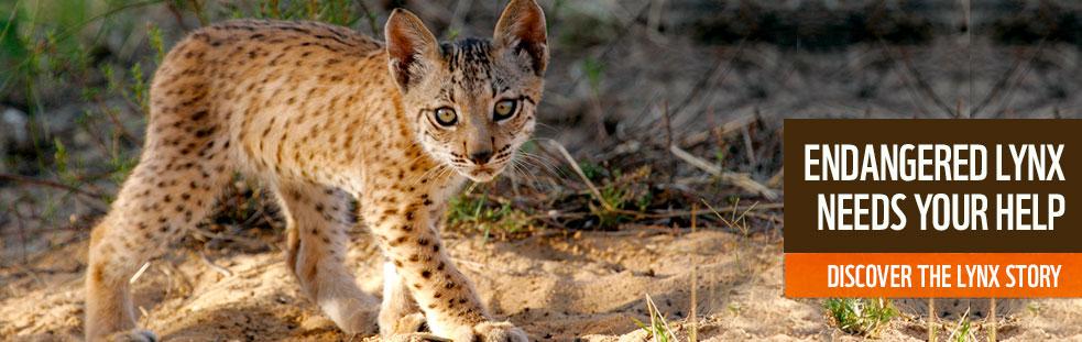 Iberian Lynx Exsitu Conservation Programme