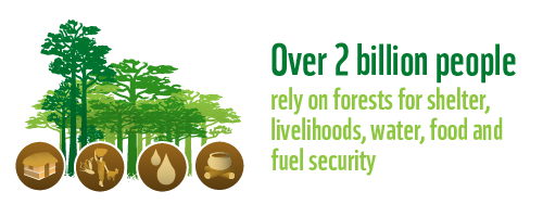2 billion people rely on forests