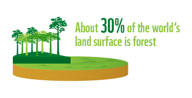 30% of land surface is forest