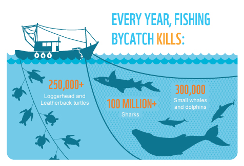 Every year, millions of marine species are caught unintentionally by fishing boats, and many die as a result.