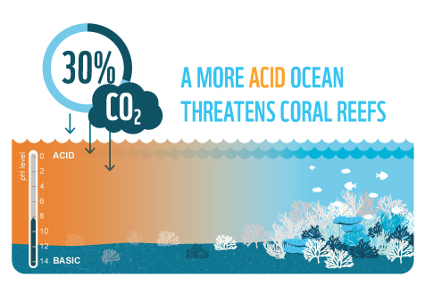 A growing amount of carbon dioxide in the atmosphere is entering the ocean and making it more acid. This is affecting negatively crustaceans and corals.