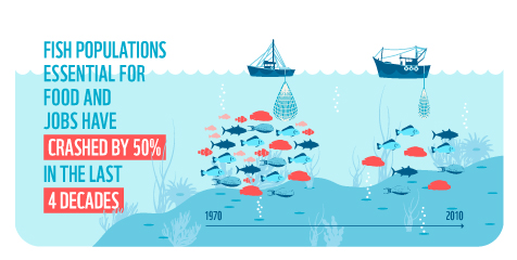 Fish populations have declined by half