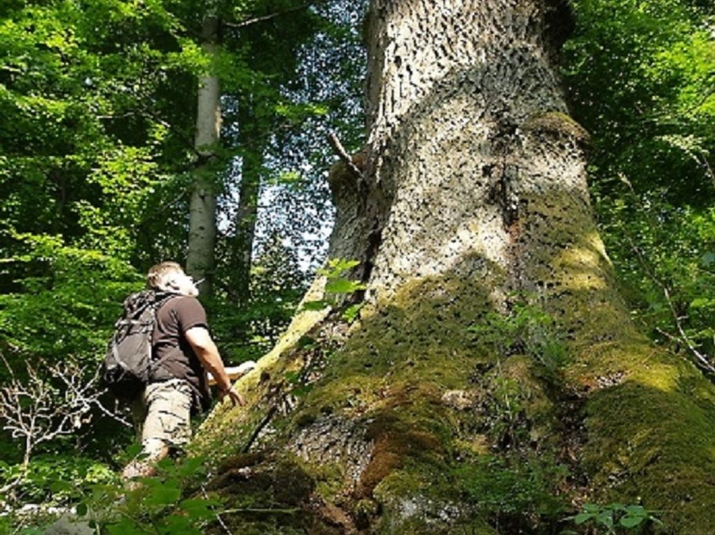 Mapovanie pralesov
