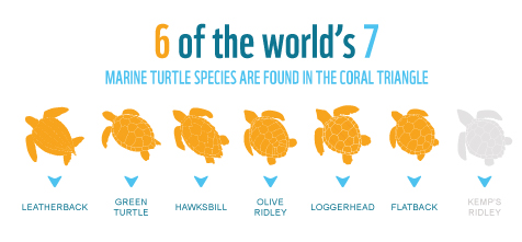 6 of the world's 7 marine turtle species are found in the Coral Triangle