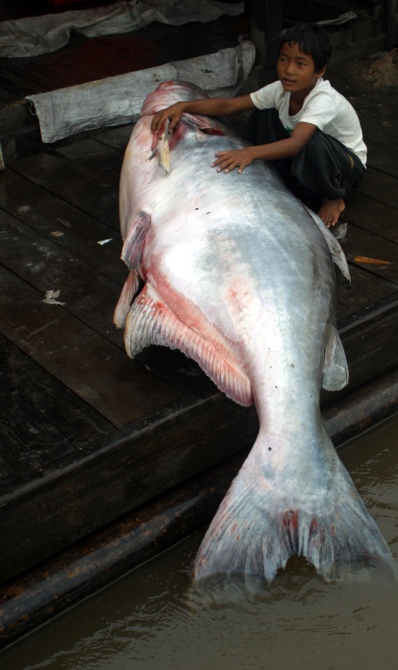 Catfish people