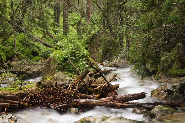Mŕtve drevo v rieke