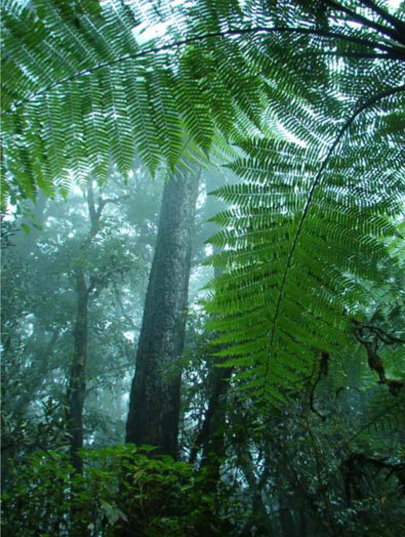 Wwf firman convenio de colaboraci n ambiental wwf y conafor for Manejo de viveros forestales