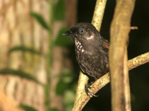 В китае обнаружен новый вид птиц фото