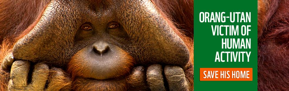� naturepl.com / Edwin Giesbers / WWF