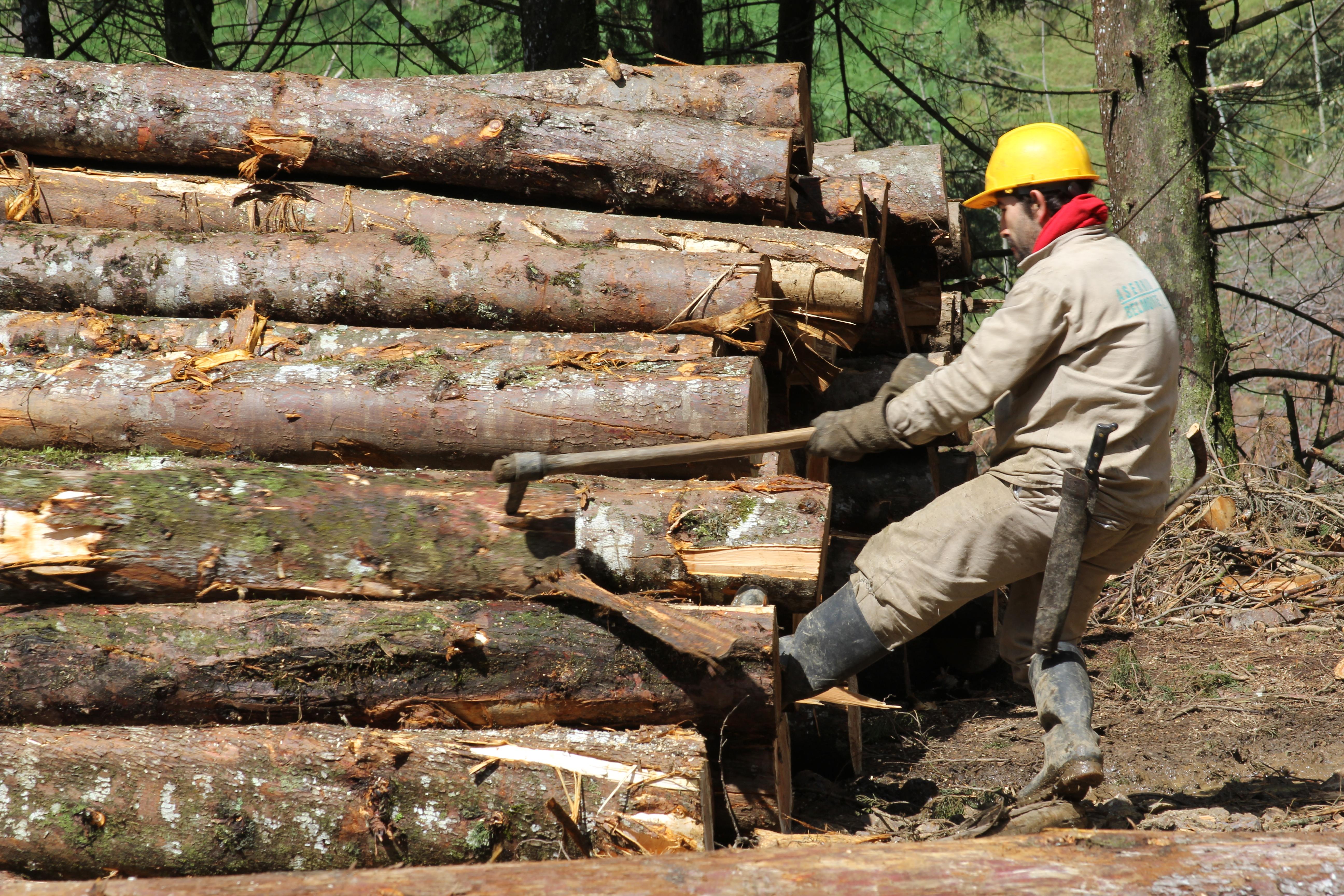 Comprando Productos Con El Sello Fsc Los Colombianos Podr N Cuidar  # Muebles Bosques Sostenibles