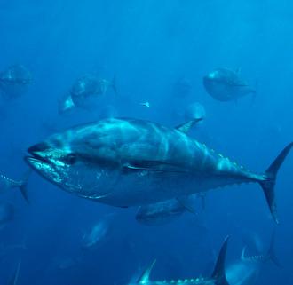 Tech for Tuna
