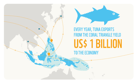 Every year, tuna export from the Coral Triangle yield US$1 billion to the economy.