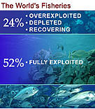 52% of the world's fisheries are fully exploited / ©: WWF