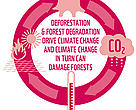Forests and climate are intrinsically linked.